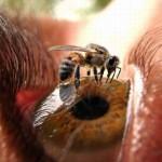 Опасные укусы насекомых