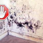 Как избавиться от грибка в квартире?