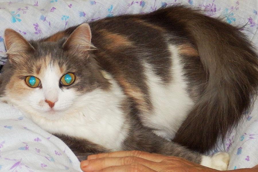 Как отучить кошку царапать мебель? | Мамины шпаргалочки