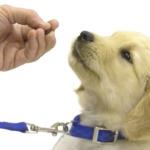 Как правильно воспитывать щенка?