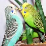 Как сделать клетку для птиц своими руками?