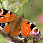 Как сделать коллекцию насекомых?