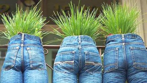 травы для выведения паразитов из организма