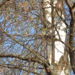 Расскажите детям: весна в мире птиц и зверей