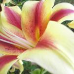 Как продлить жизнь цветам в вазе?
