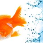 Как содержать аквариум в домашних условиях?