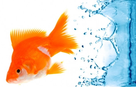Инструкция по как содержать аквариум в домашних