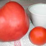 Как сажать помидоры семенами, рассадой