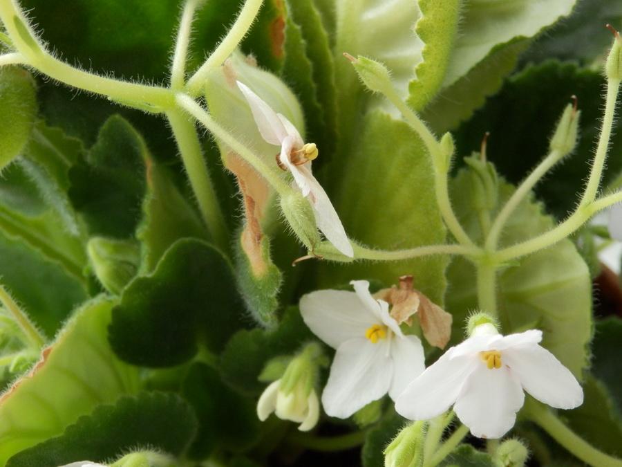 вредители в земле комнатных растений фото и как с ними бороться