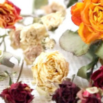 Как засушить розу в домашних условиях?