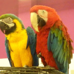 Можно ли научить попугая говорить?