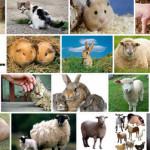 Что изучает зоонимика?