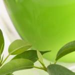Пятна от зеленого чая: чем их вывести?