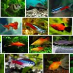 Чем можно кормить аквариумных рыбок?