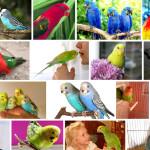 Как ухаживать за попугаем в домашних условиях?