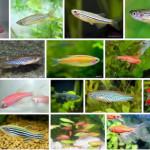 Разведение домашних аквариумных рыбок из икры