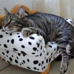 Кошачьи блохи в квартире: Как от них избавиться?